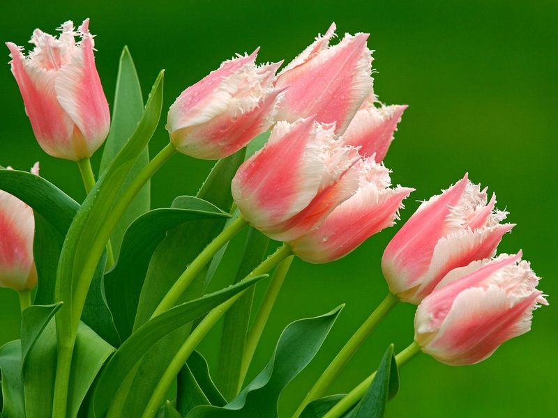 Flowers%20of%20the%20green%20garden